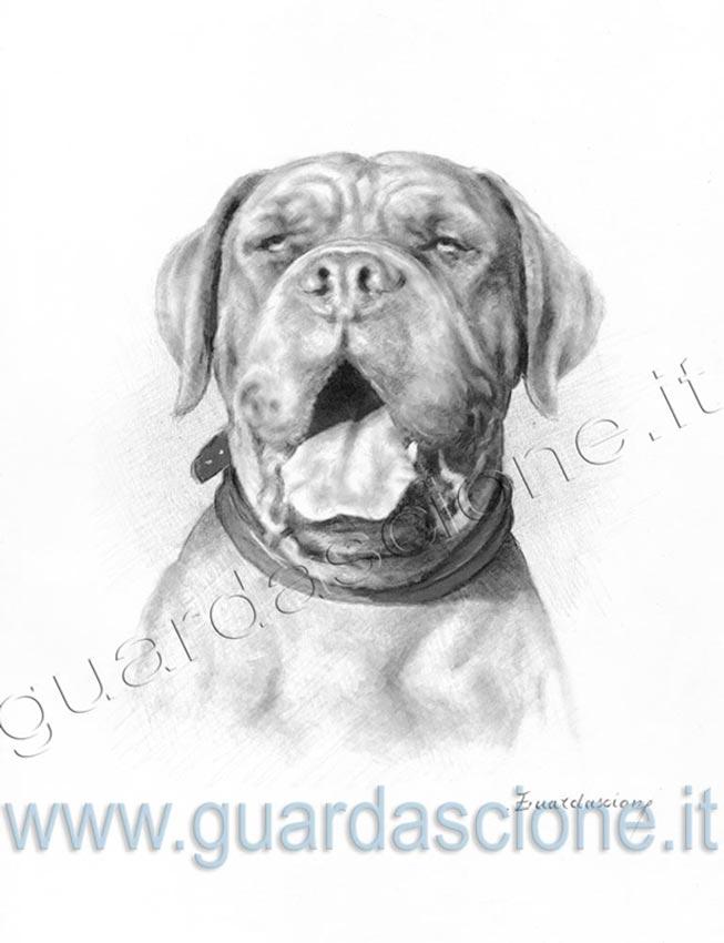 Ritratti E Disegni Di Cani Eseguiti Da Foto Quadri Di Cani A Matita